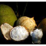 Yuk bisnis kelapa kopyor super hasil kultur jaringan embrio