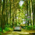 Hutan Pinus Sentul, Bogor : Tempat asyik bikin foto ciamik..